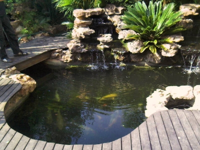 Water dynamix johannesburg cylex profile for Koi pond deck
